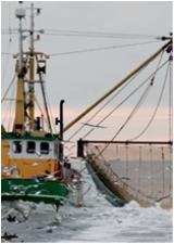 Офшор и рыболовство